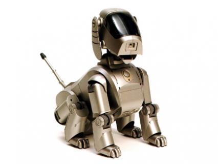 Martre grignotteuse, solution ? Chien-robot